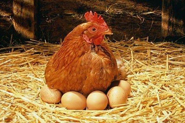 Μέγεθος αυγών