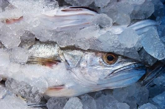 Πώς θα αποφύγω την άσχημη μυρωδιά των ψαριών