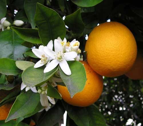 Μαρμελάδα πορτοκάλι απίθανη