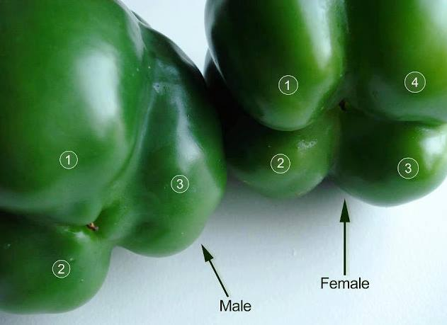 Αυτό το ξέρατε για τις πιπεριές;