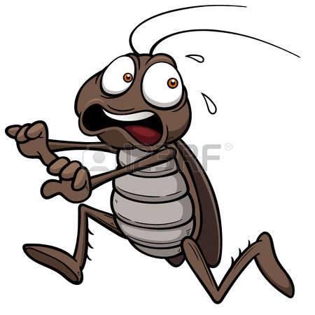 Κατσαρίδες